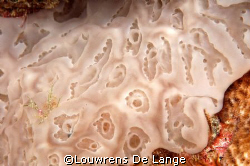 Sponge brilliance! by Louwrens De Lange 